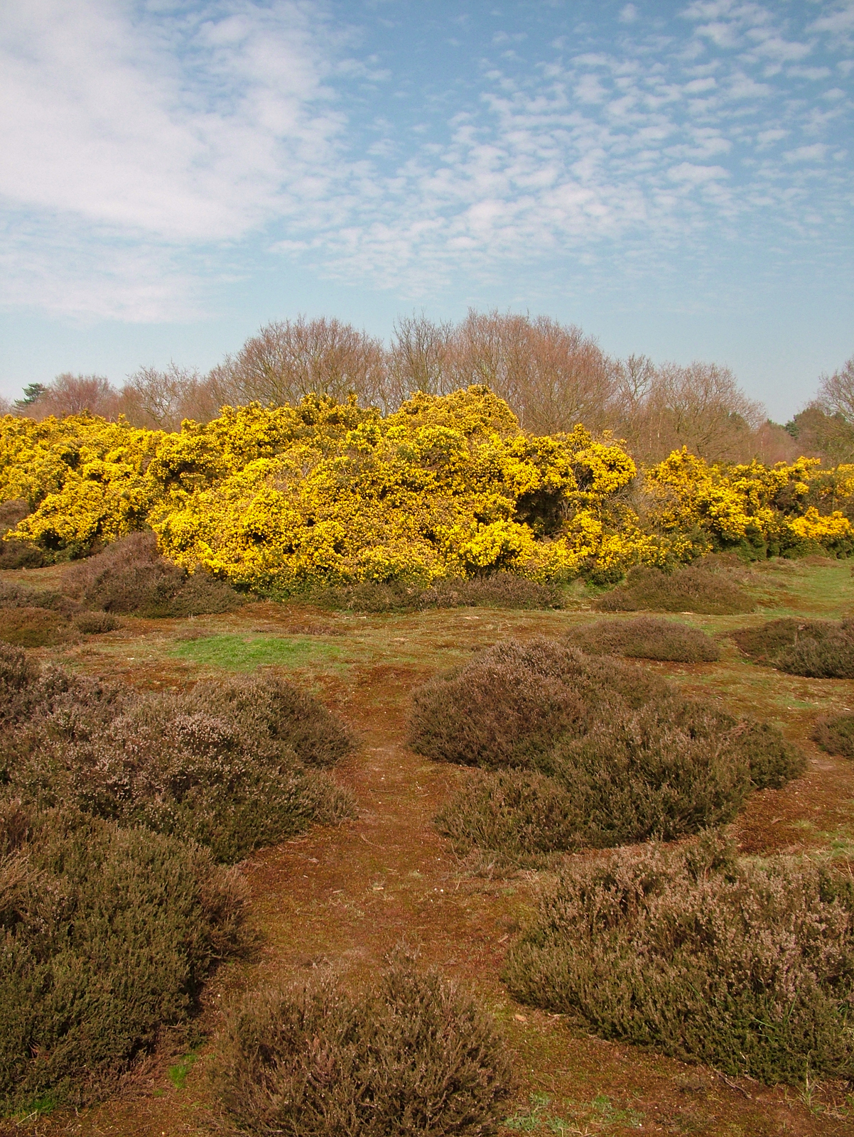 Purdis Heath Ipswich